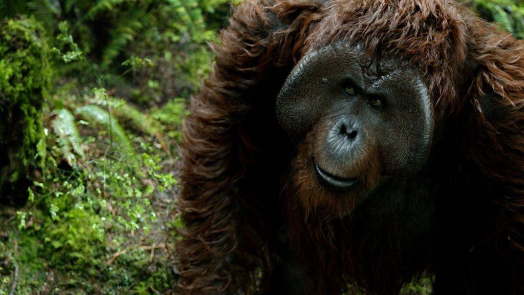 Maurice Pianeta delle Scimmie